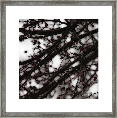 Framed Print featuring the photograph Winter Rain - 3 by Linda Shafer