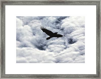 Winter Raven Framed Print by Daniel Furon