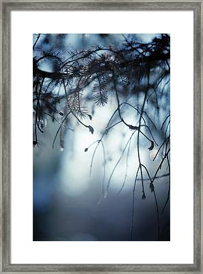 Framed Print featuring the photograph Winter by Rebecca Cozart