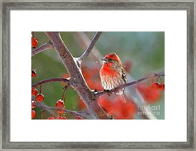 Winter Red Framed Print by Betty LaRue
