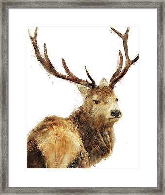 Winter Red Deer Framed Print by Amy Hamilton