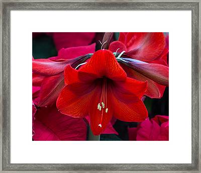 Framed Print featuring the photograph Winter Red by Robert Pilkington