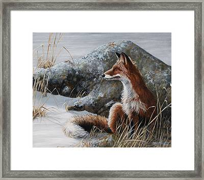 Winter Respite Framed Print by Rob Dreyer