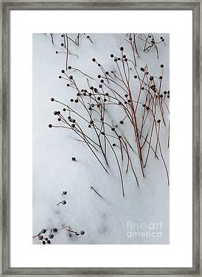 Winter Rest Framed Print by Diane E Berry