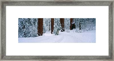 Winter Road Into Sequoia National Park Framed Print by Panoramic Images