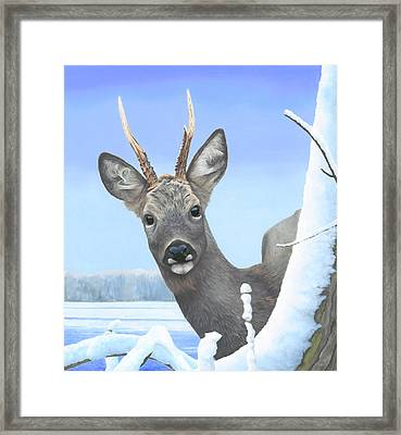 Winter Roebuck Framed Print by Clive Meredith