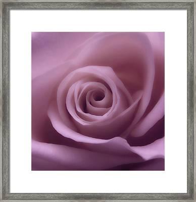 Winter Rose 7 Framed Print