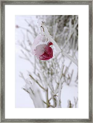Framed Print featuring the photograph Winter Rose by Arthur Fix