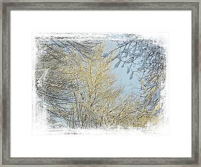 Winter Scenic Framed Print