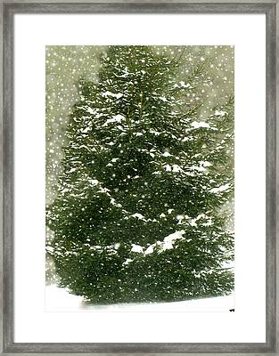 Winter Shines Over Pine Framed Print