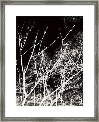 Winter Sky Deepest Red Framed Print by Roxy Riou