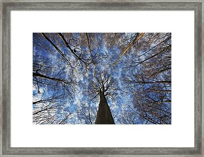 Winter Sky Framed Print by Mircea Costina Photography