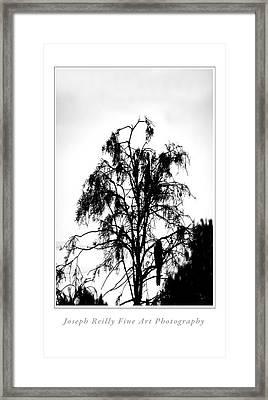 Winter Sky Wood Storks Framed Print by Joseph Reilly