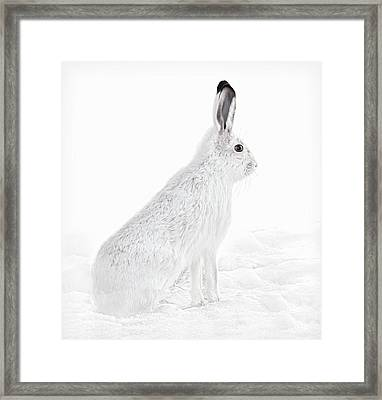 Framed Print featuring the photograph  Winter Snowshoe Hare by Jennie Marie Schell