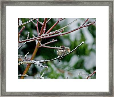 Winter Solstice Hummer Framed Print