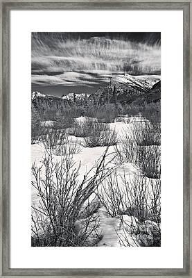 Winter Spice In Monochrome Framed Print
