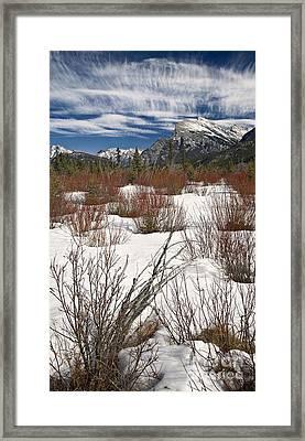 Winter Spice Framed Print