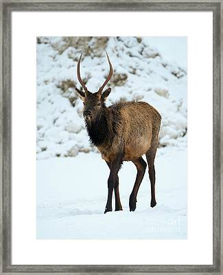 Winter Spike Framed Print by Mike Dawson