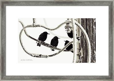 Winter Starlings Framed Print by Don Durfee