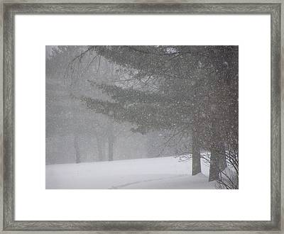 Winter Storm In Bush Framed Print by Richard Mitchell