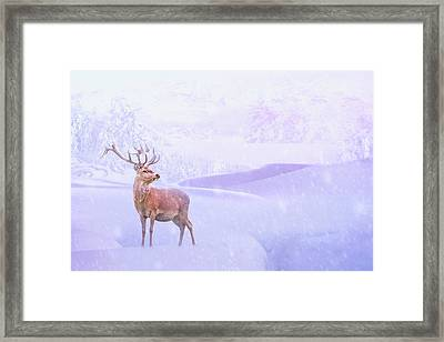 Winter Story Framed Print by Iryna Goodall