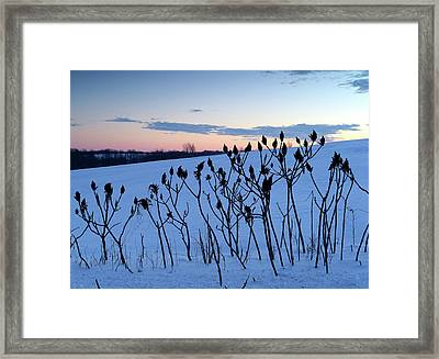 Winter Sumac 2016 Framed Print