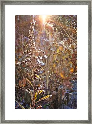 Winter Sun Texture Framed Print by JAMART Photography