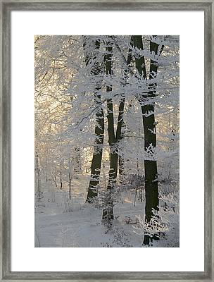 Winter Sun Framed Print by Odd Jeppesen