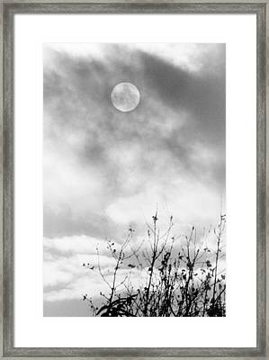 Winter Sun Framed Print by Randall Paar