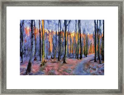 Winter Sunset In The Beech Wood Framed Print