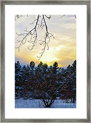 Winter Sunset On The Tree Farm #2 Framed Print