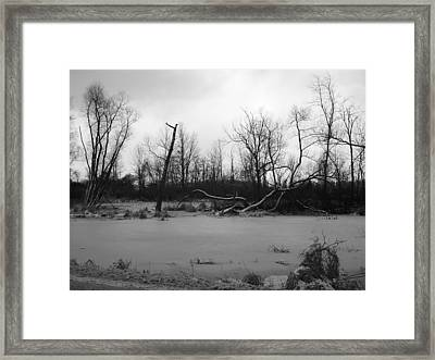 Winter Swamp Framed Print