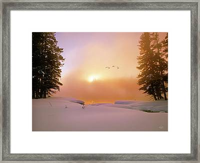 Winter Swans Framed Print by Leland D Howard