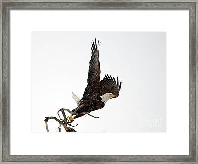 Winter Take-off Framed Print by Mike Dawson