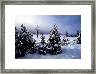 Winter Takes All Framed Print
