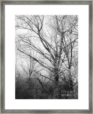 Winter Tales II Framed Print