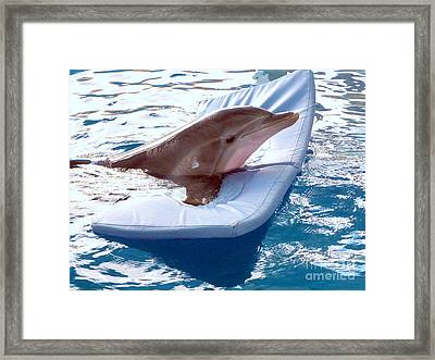 Framed Print featuring the photograph Winter The Dolphin by Terri Mills