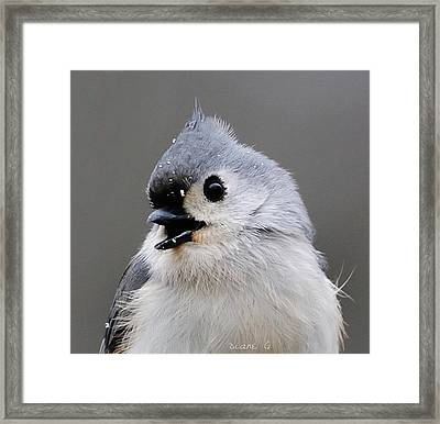 Winter Titmouse Framed Print