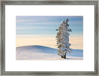 Winter Track Framed Print by Mike DeCesare