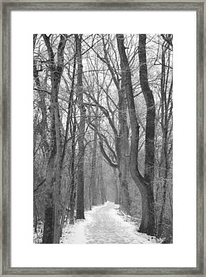 Winter Trail Framed Print by Peter  McIntosh