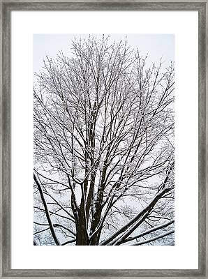 Winter Tree    Poster Framed Print