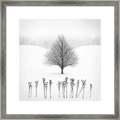 Winter Tree #13 Framed Print by Matt Anderson