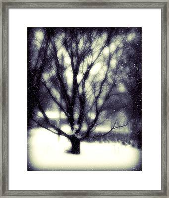 Winter Tree 3 Framed Print by Perry Webster