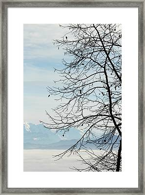Winter Tree And Alps Mountains Upon The Fog Framed Print