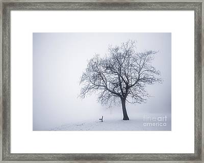 Winter Tree And Bench In Fog Framed Print by Elena Elisseeva