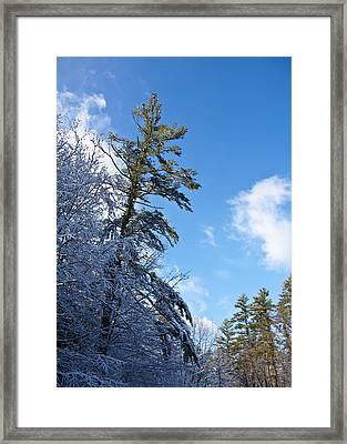 Winter Tree And Sky Framed Print by Edward Myers