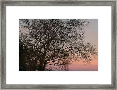 Winter Tree At Sunset Framed Print