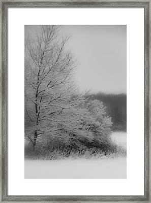 Winter Tree Framed Print