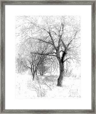 Winter Tree In Field Of Snow Sketch Framed Print by Randy Steele