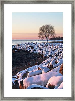 Winter Tree In New Castle Framed Print by Eric Gendron